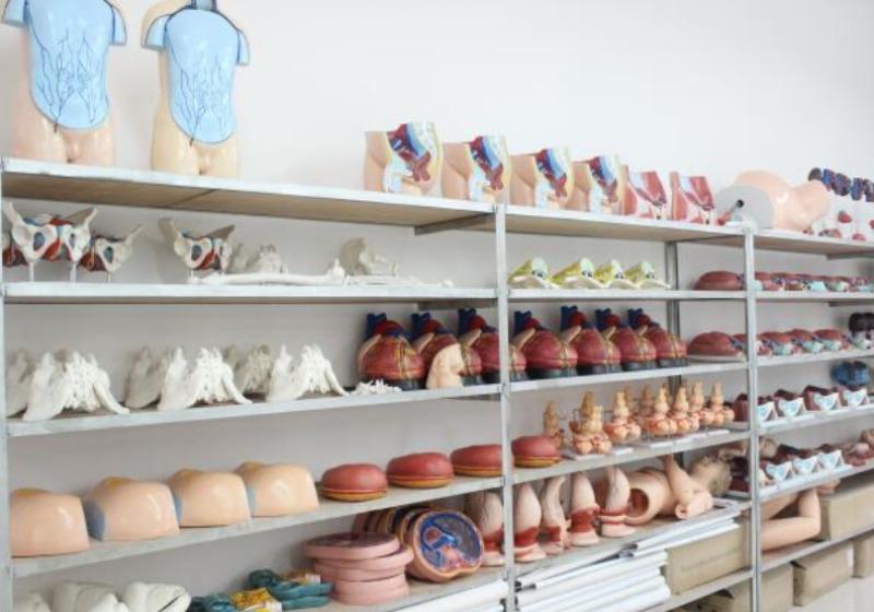 人体标本实训室